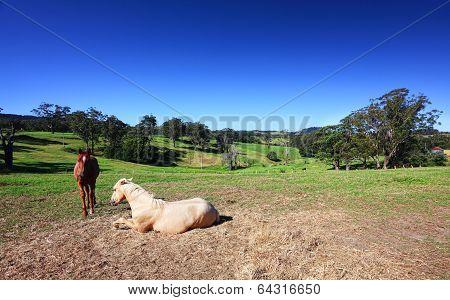 Picturesque Australian Landscape