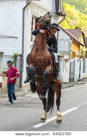 Horse Rearing With Rider In Brasov, Romania