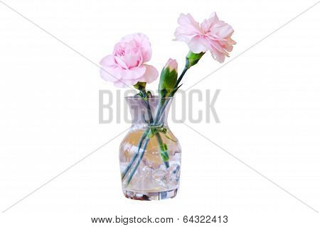 Pink Flower dicut on white background