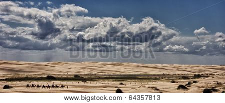 Guided camel ride in sand dunes