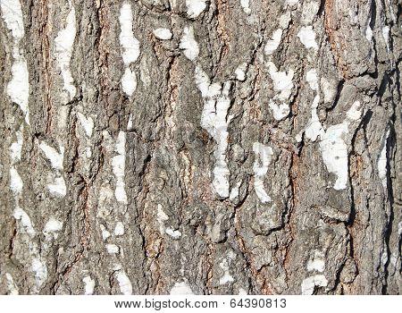 element birch bark for background