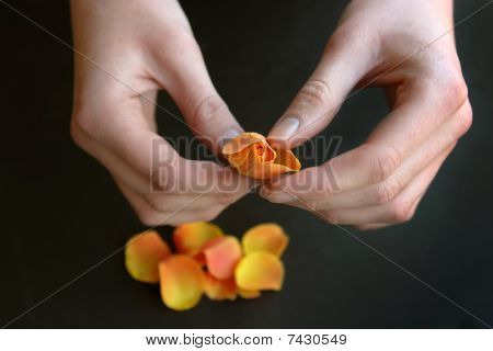 Girl Removes Flower Petals