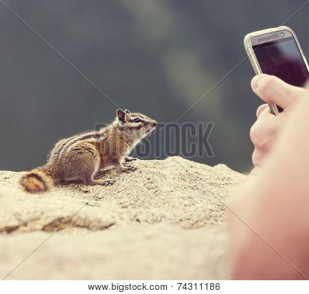 photographing chipmunk