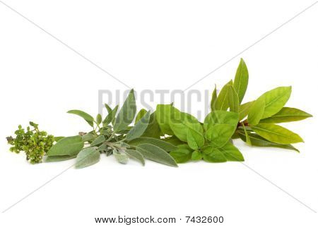 Thyme, Sage, Oregano And Bay Herbs