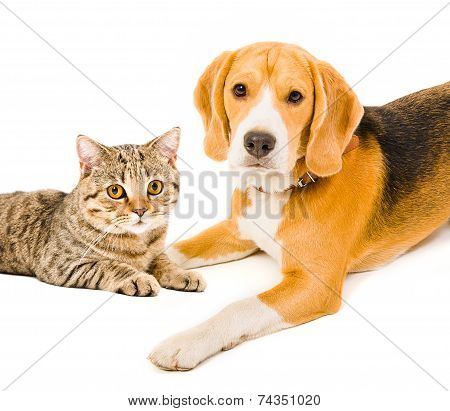 Portrait of a dog and a cat lying together