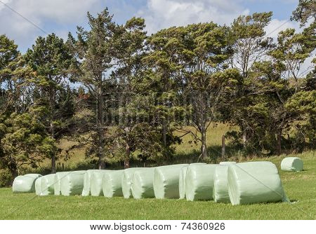 The row of wrapped silage on green farm in harvest season in countryside New Zealand. poster