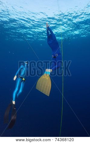 Underwater shot of free divers ascending along the rope. Constant weight discipline