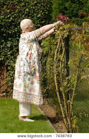 senior woman pruning the hedge
