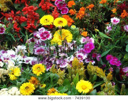 schöne frische Blumen