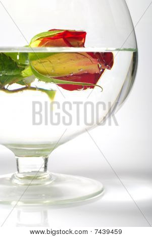 Still Life With Rose In Water