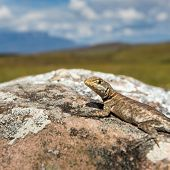 Lizard in road to Mount Roraima - Venezuela Latin America poster