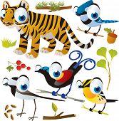 vector cartoon animal set: tiger and birds: bird of paradise, warbler, jay and wagtail poster