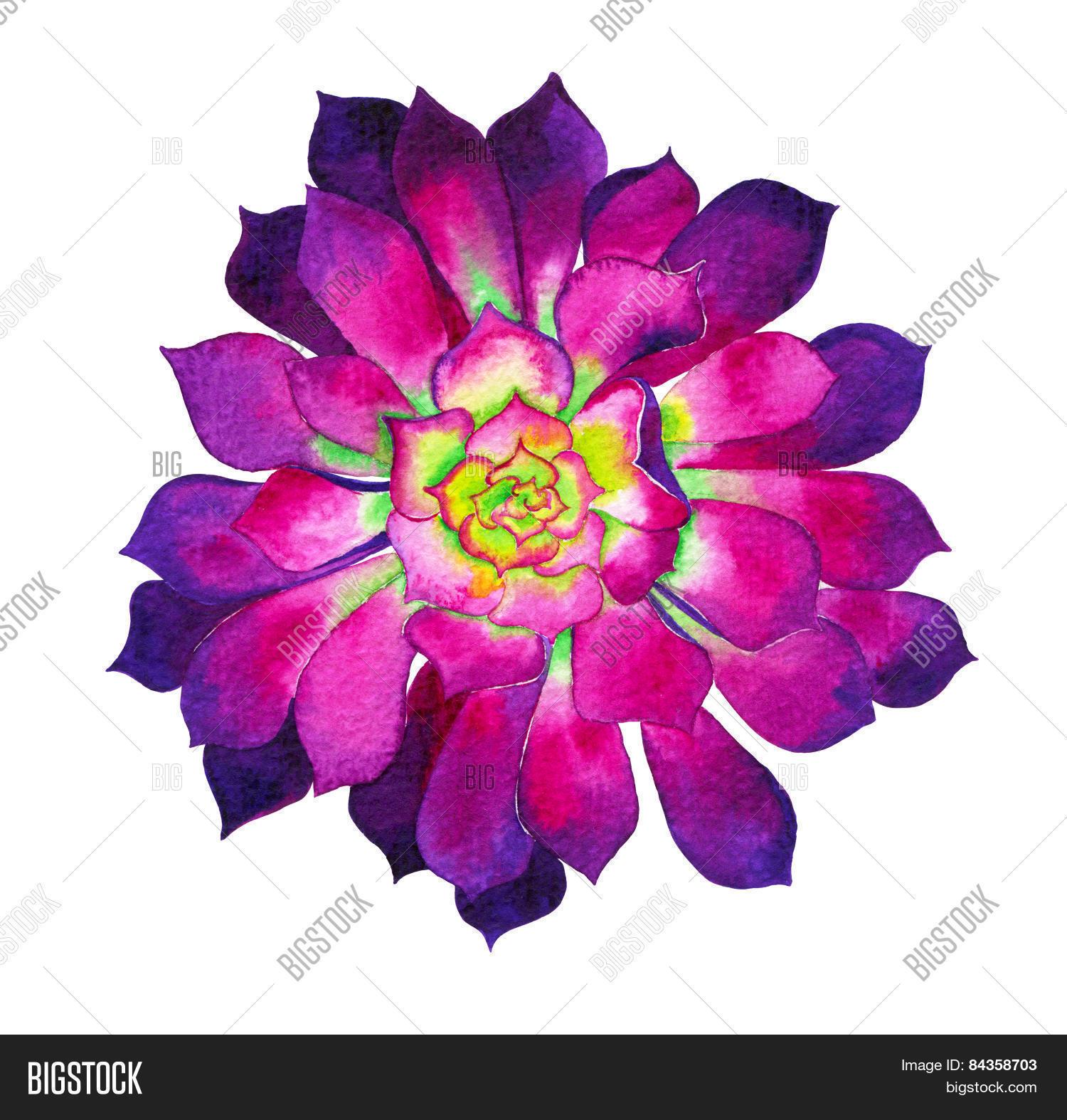 Watercolor Illustration Of A Aeonium Cactus Flower