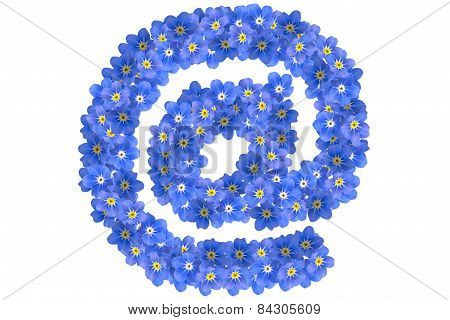 Forget Me Not At
