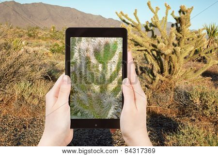 Tourist Shooting Photo Of Cactus In Mohave Desert