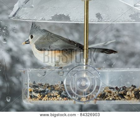 Tufted Titmouse In Window Bird Feeder