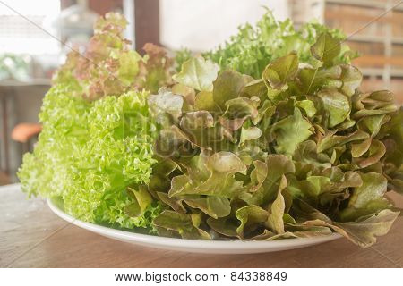 Fresh Organic Mix Salad Vegetable