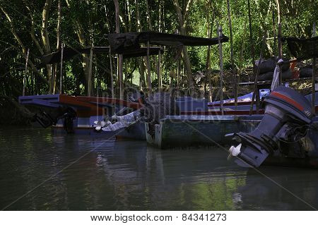 Fisherman boat park in mangrove forest
