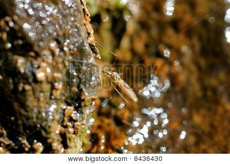 Mosquito Macro