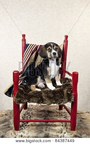Beagle Puppy In A Chair