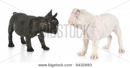 Puppies Looking Backwards