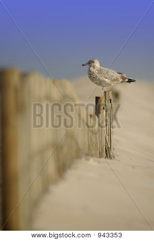 Bird On Fence At Beach