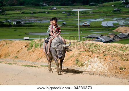 Two H'mong Ethnic Minority boys ride buffalo in MuCangChai, Vietnam