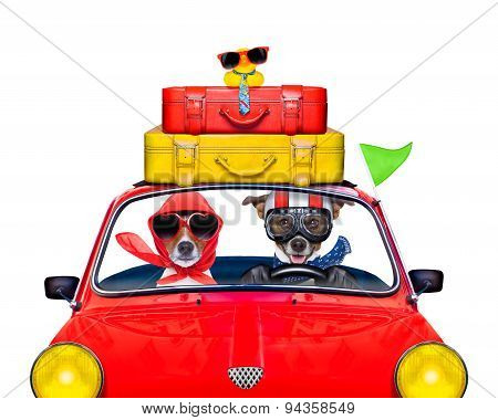 Dog Driving A Car