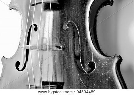 Old Violin In Black And White