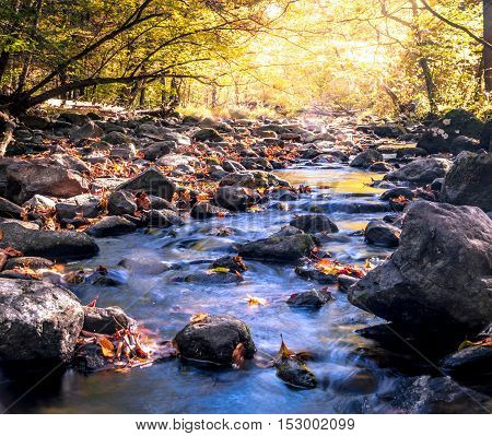 The Flatbrook River in Stokes State Forest, NJ, flows slowly along rocks and Autumn leaves illuminated by the soft glow of the sun