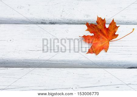Fall maple red leaf on white wooden background. Autumn fall leaves background