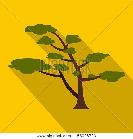 Cedar tree icon. Flat illustration of cedar tree vector icon for web isolated on yellow background