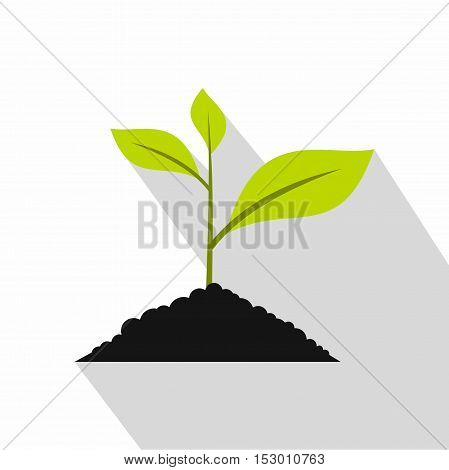 Green seedling in soil pile icon. Flat illustration of green seedling seedling in soil pile vector icon for web