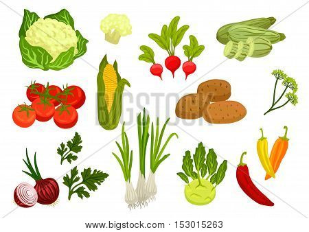 Farm vegetables isolated vector icons. Vegetarian farm vegetable products. Cauliflower, tomato and onion, corn and parsley, leek and radish, potato, kohlrabi, zucchini, dill, chili pepper elements for grocery store