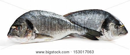 Two fresh dorado fishes or gilthead isolated on white background.