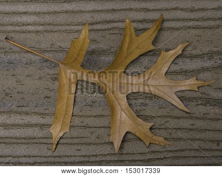 Brown oak leaf on brown boards with stem in upper left corner