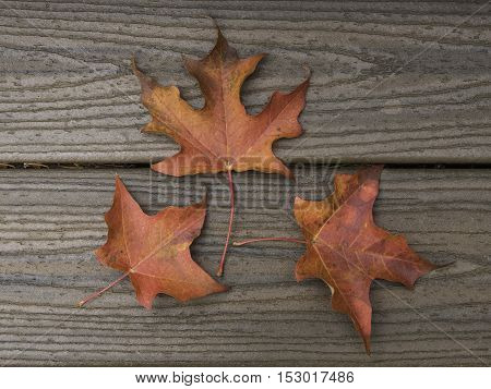 Three red maple leaves on brown boards from above