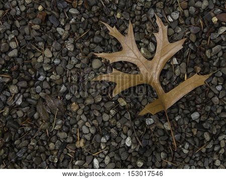 Single brown oak leaf on gravel bed in the upper right corner