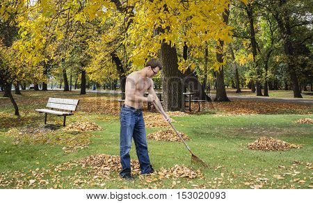 horizontal image of a shirtless young man out in the park raking up leaves on a beautiful warm day in the fall.