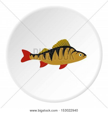 Perch fish icon. Flat illustration of perch fish vector icon for web