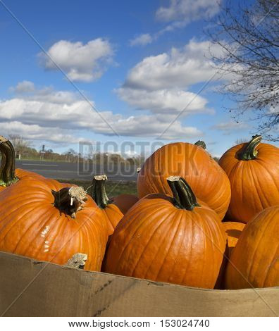 Pile of pumpkins under a beautiful blue sky with clouds, square banner size