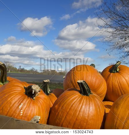 Pile of pumpkins under a beautiful blue autumn sky with clouds