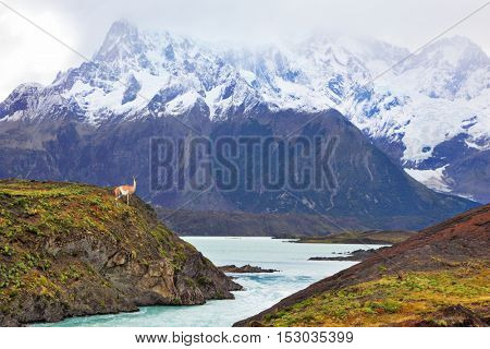 Neverland Patagonia. Snow-capped mountains of the national park Torres del Paine. Icy emerald water of the mountain river flows between hills. On the shore stands small vicuna