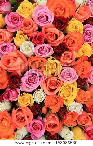 Multicored wedding roses: a mix of orange red pink and white