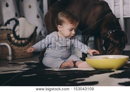 cute baby boy eating cookies and playing at home dog asking some sweets. Candid capture in real life interior