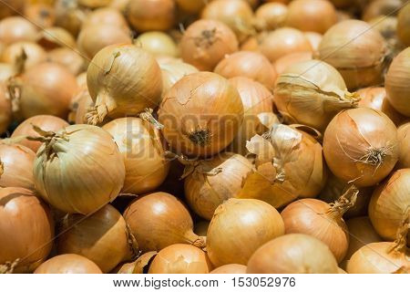 Fresh onions. Onions background. Ripe onions. Onions in market. Fresh golden onions