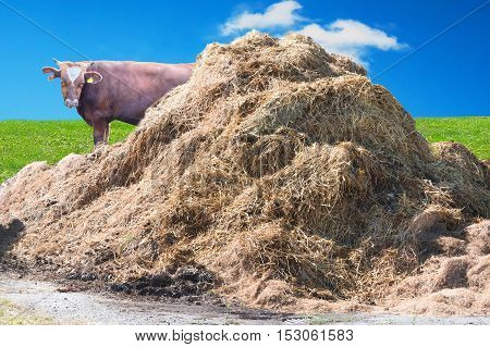 A manure pile on a farm in the background a wall of bricks.