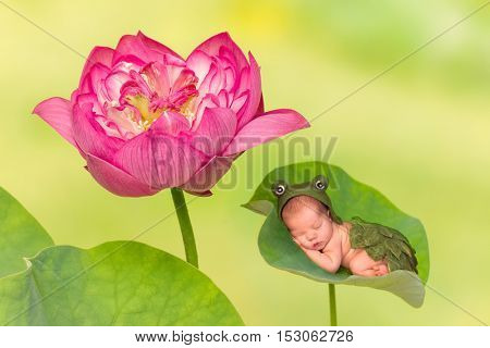 7 days old newborn baby in frog outfit sleeping on a leaf of a real lotus nelumbo flower