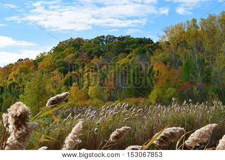 Photograph of a beautiful and colourful autumn landscape.