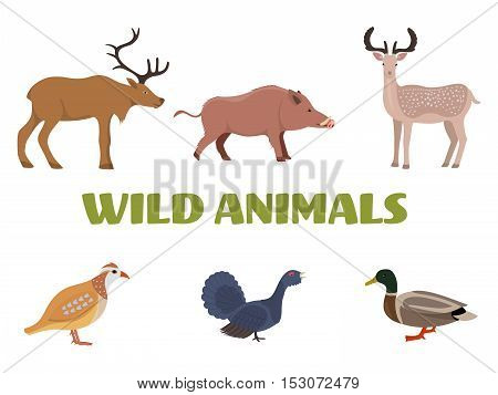 Wild forest animals with wild boar, deer, moose, duck, grouse and partridge. Vector illustration